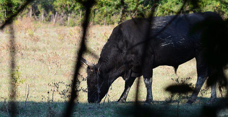 camargue-stiere-naturschutzgebiet1