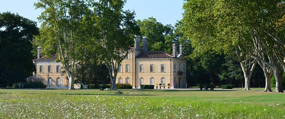 Camargue Schloss Avignon Stiere