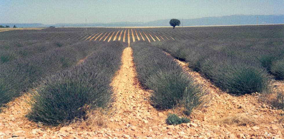 Haute-Provence Lavendelfelder Plateau Valensole