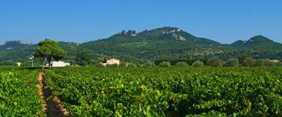 Vaucluse Provence Departement Weinstöcke