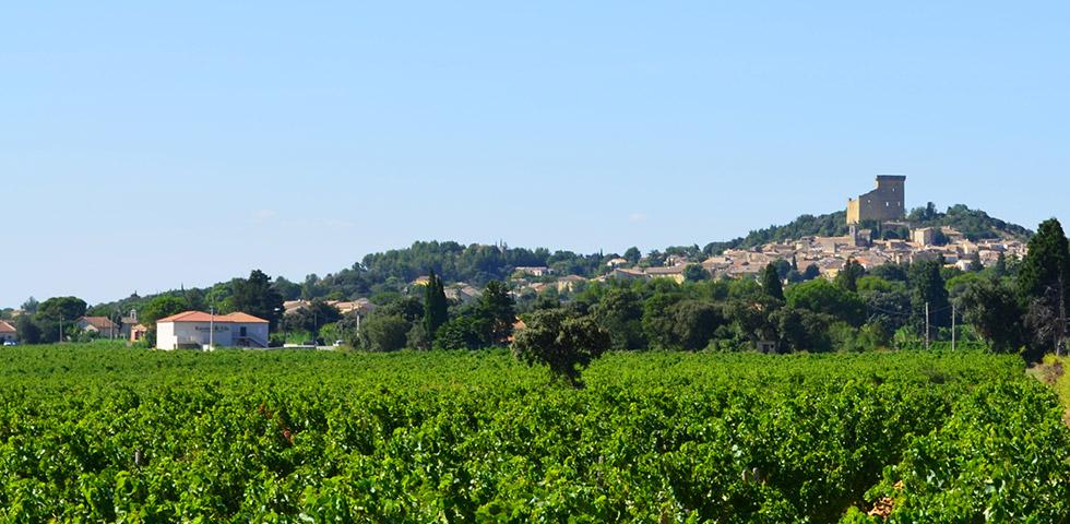 Rotweine Provence Chateau-neuf-du-pape gigondas