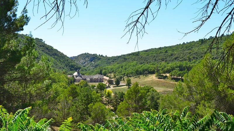 Senanque-kloster-gordes-provence