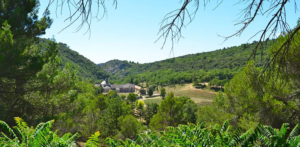 Zisterzienser-Kloster Senanque mit Lavendelfelder