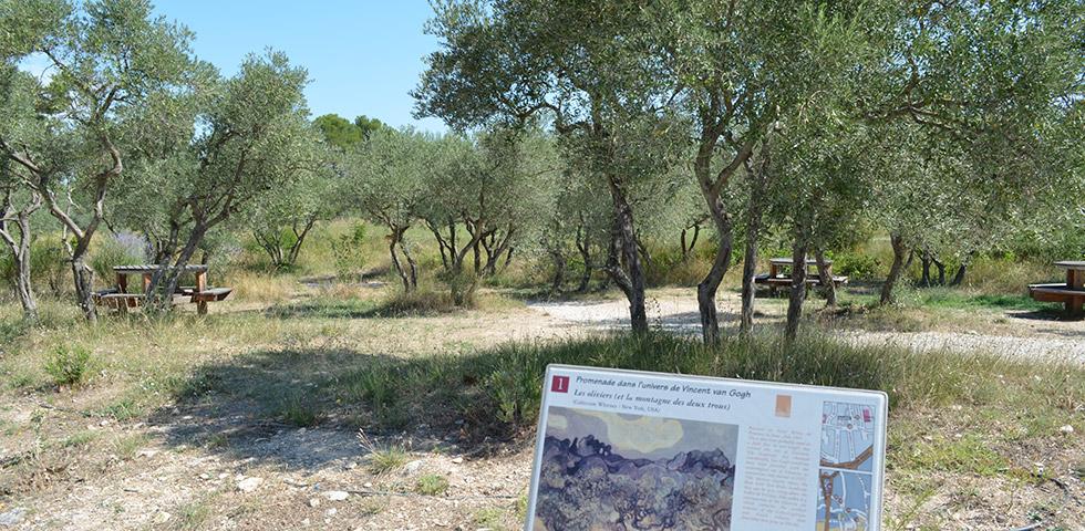 Olivenbäume bei Glanum Gemälde van Gogh