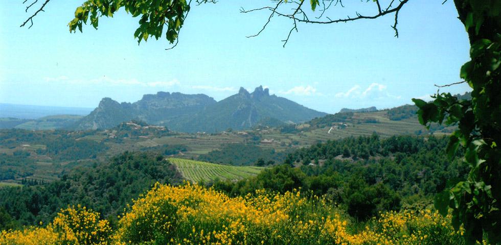 Landschaft Lavendel in der Haute-Provence