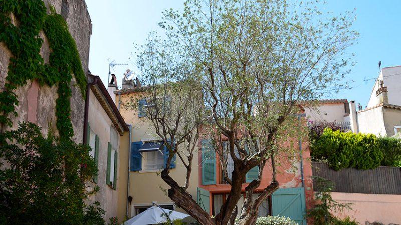 saint-tropez-altstadt-olivenbaum