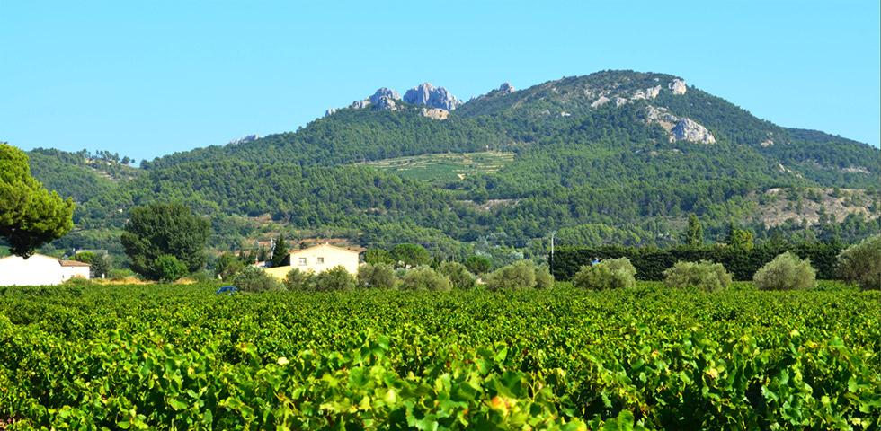 Dentelles de Montmirail bei Gigondas mit Weinfelder