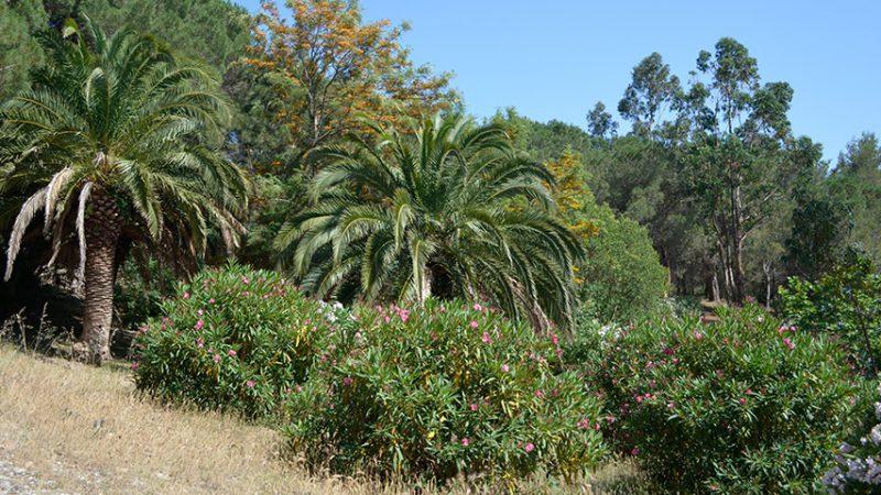 vegetation-in-saint-tropez