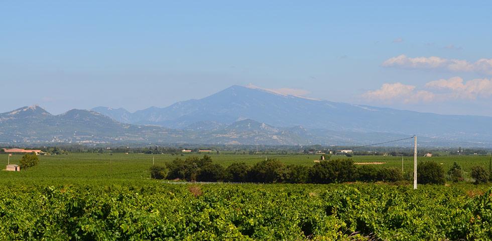 Mont Ventoux Provence mit Weinfelder bei Châteauneuf-du-Pape