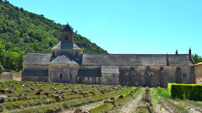 Lavendelfelder-Senanque-Provence