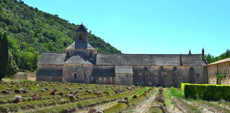 Kloster Senanque mit Lavendelfelder bei Gordes