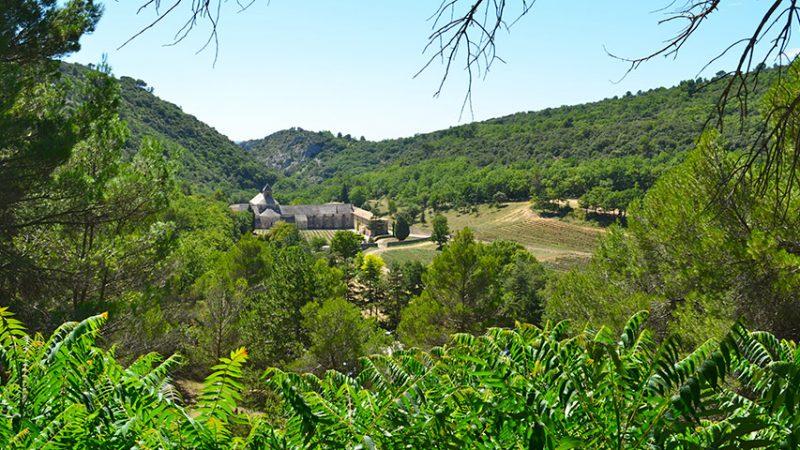 Gordes-senanque-provence-lavendelfelder