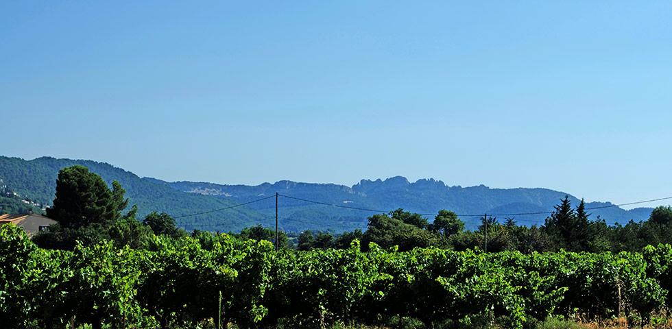 Vacqueyras Wein Vaucluse