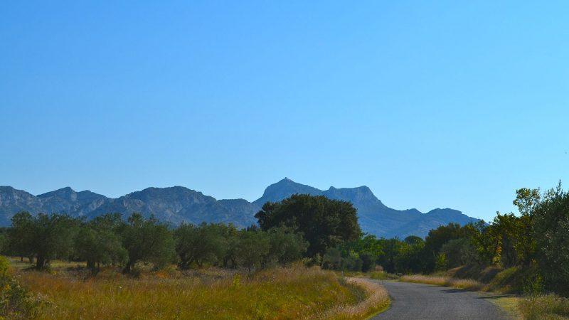 Alpilles Nationalpark Provence Olivenöl
