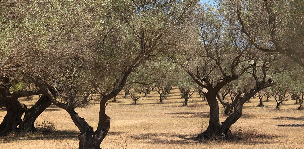 Reisetipps Provence